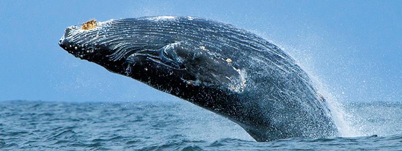 Walvissen kijken in Mirissa, Sri Lanka