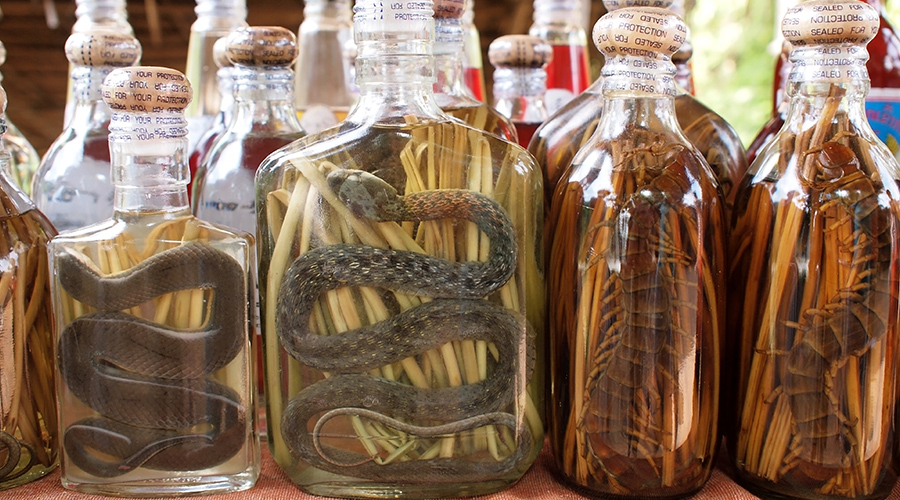 Rice whiskey with pickled snake in Laos